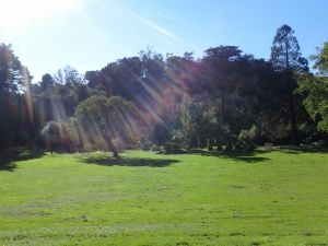 Arch of the Colonial Trees, Golden Gate Park