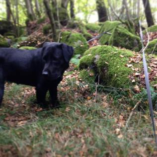 With the dog in the woods