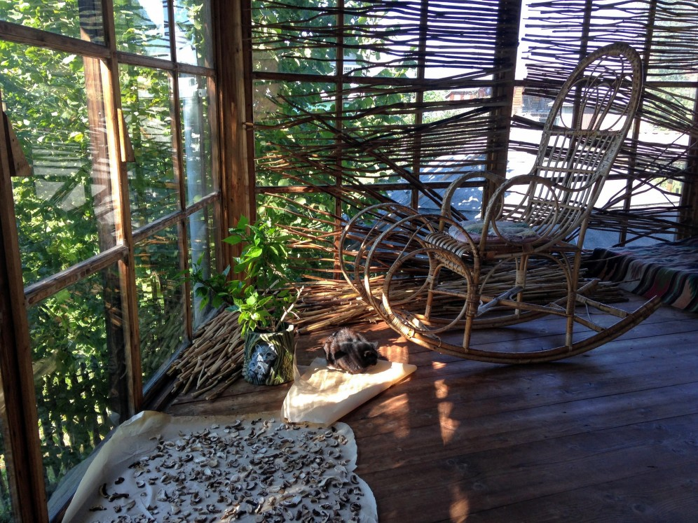 Carpathian paradise: a rocking chair, a cat, and mushrooms drying in the sun