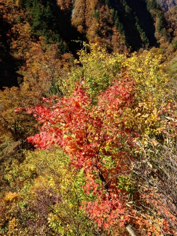 Stunning foliage. Shot on iphone.