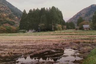 Fields at dusk. Shot on film.