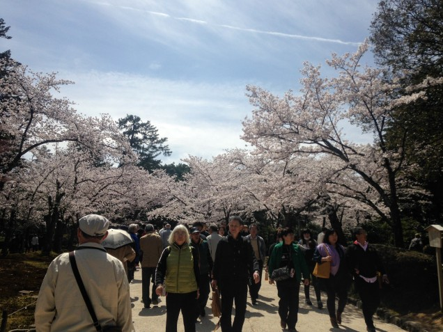 Cherry blossoms and crowds! Shot on iphone.