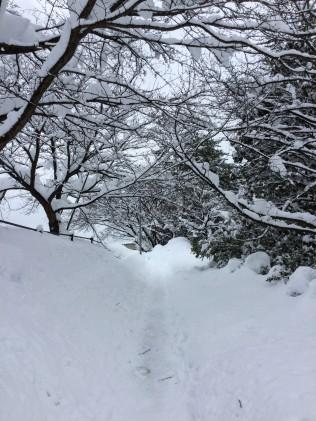 Snow-laden trees in Kanazawa.