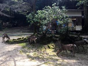 So many deer!