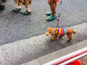 Rainbow dog. Photo by Beatrice Lord